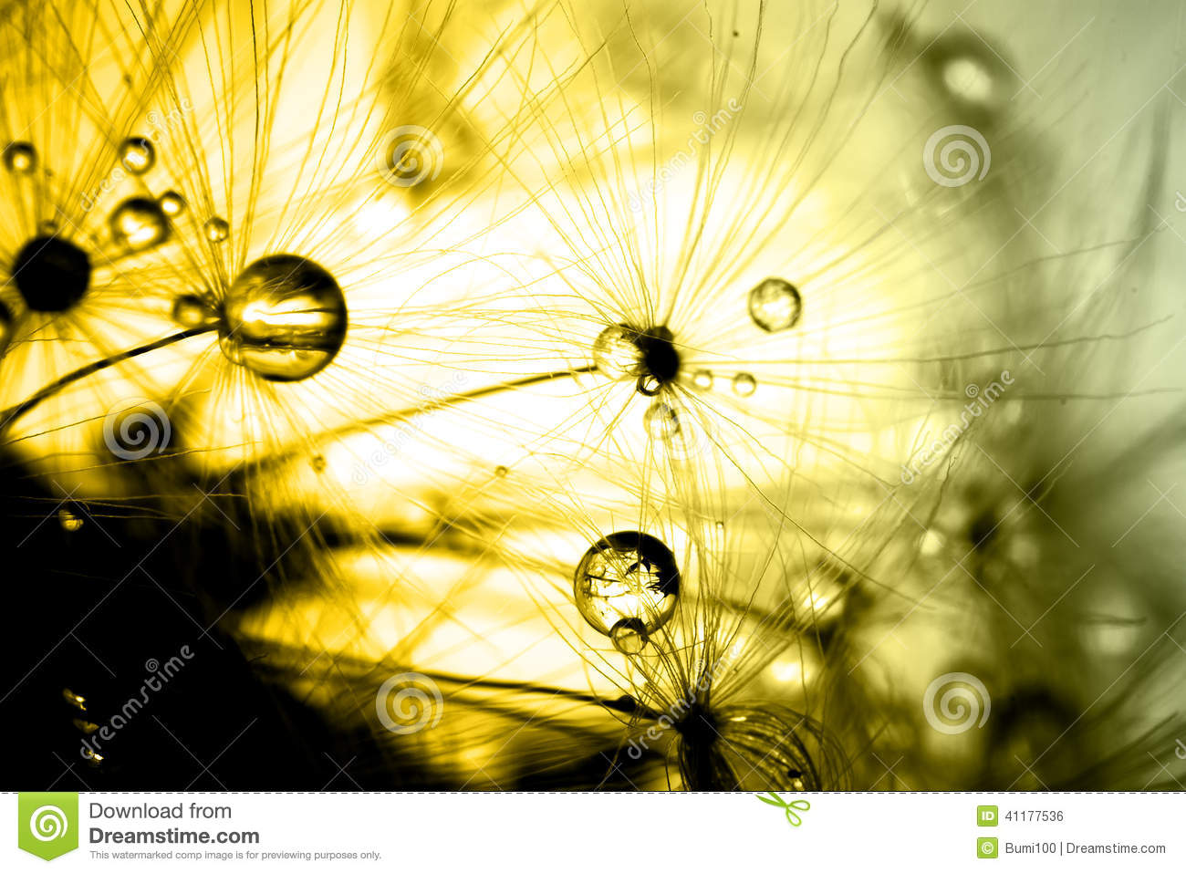 Download Abstract Colorize Macro Of Plant Seeds Dandelion Stock Photo - Image of closeup, abstract: 41177536