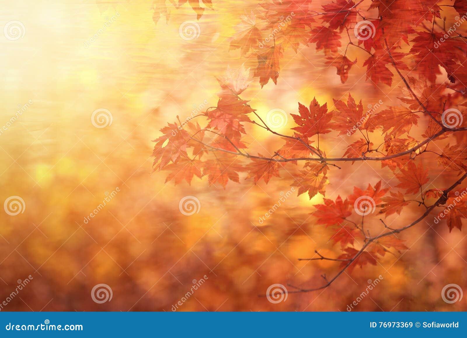 Abstract de herfstbos