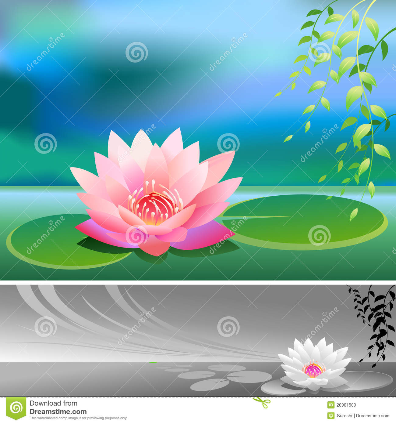 Free Lotus Flower Images Background Lotus Vector Flower White