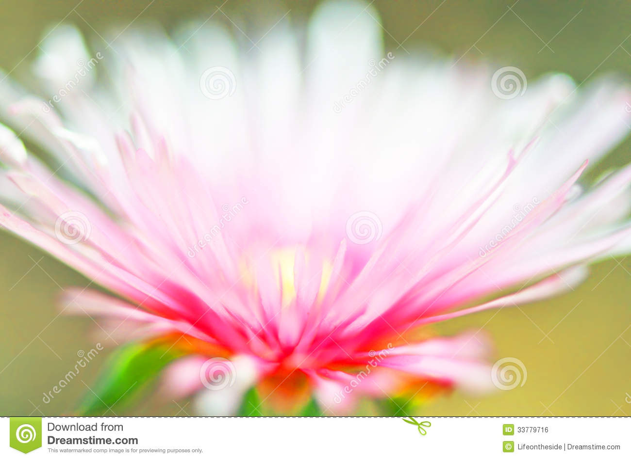 Light pink flowers names 2018 images pictures names of pink it has fragile pale pink light pink flowers names mightylinksfo