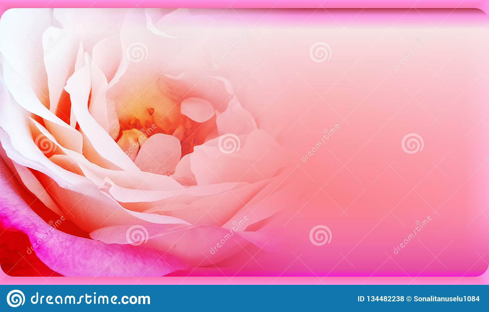 Roses In Soft Color Made With Blur Style For Background Blurred Of Rose Flowers Blooming In The Pastel Color Style Stock Illustration Illustration Of Makeup Pattern 134482238