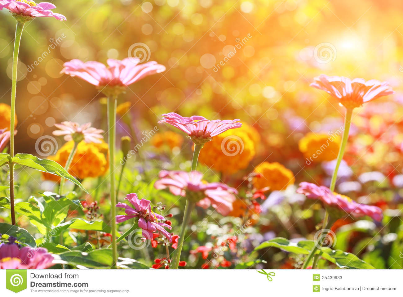 Abstract flowerbed on sunny day