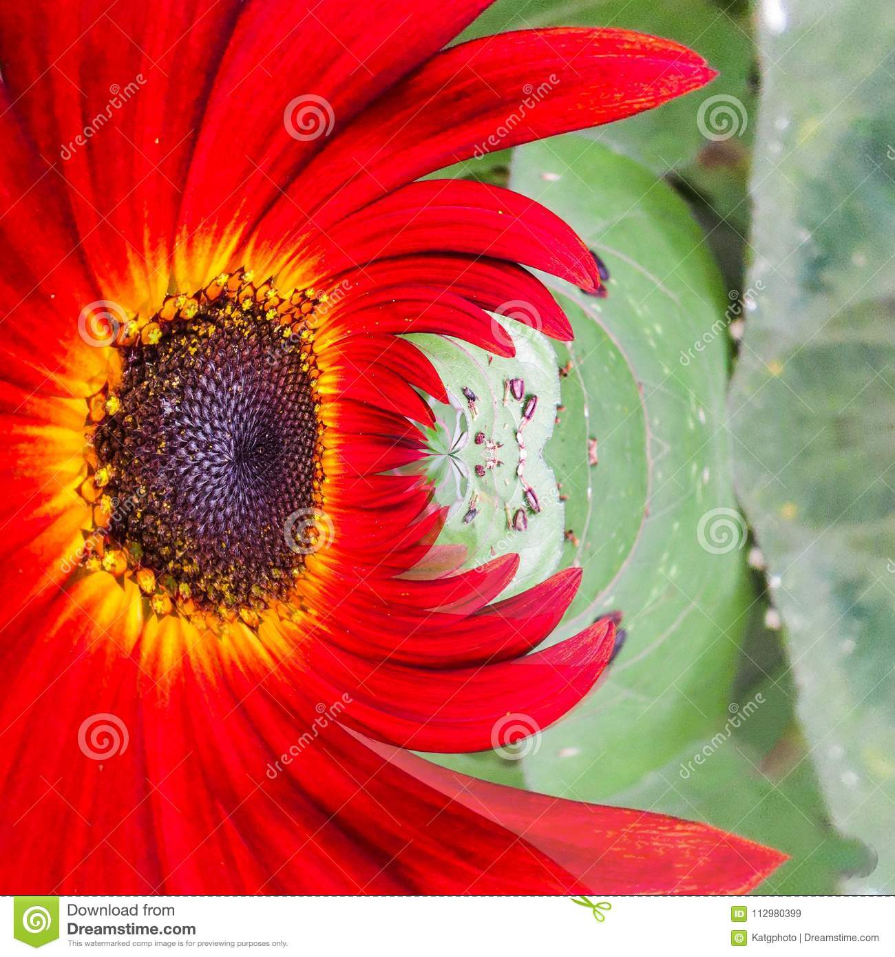 Abstract Formation A Colorful Red Zinnia Flower With A Green Plant Background