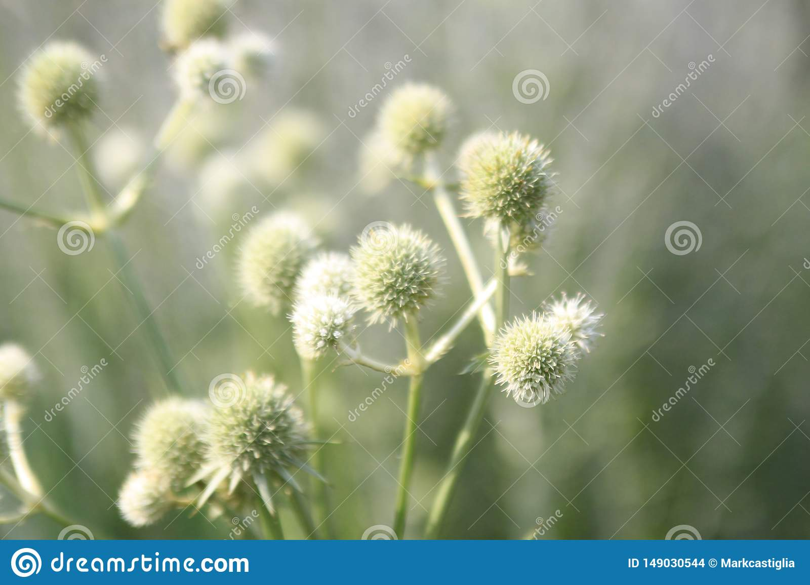 Abstract garden and thistle seeds