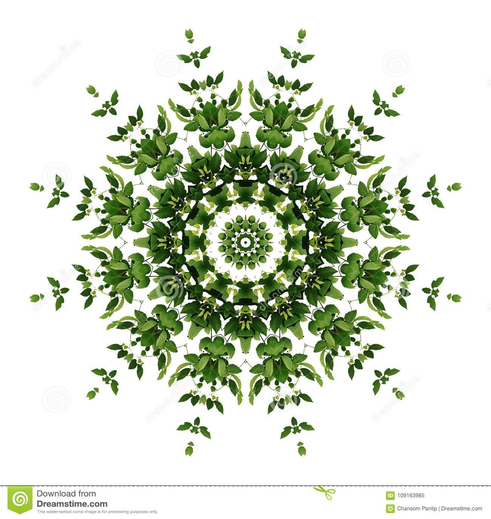 Abstract green background flora mandala pattern, wild climbing v