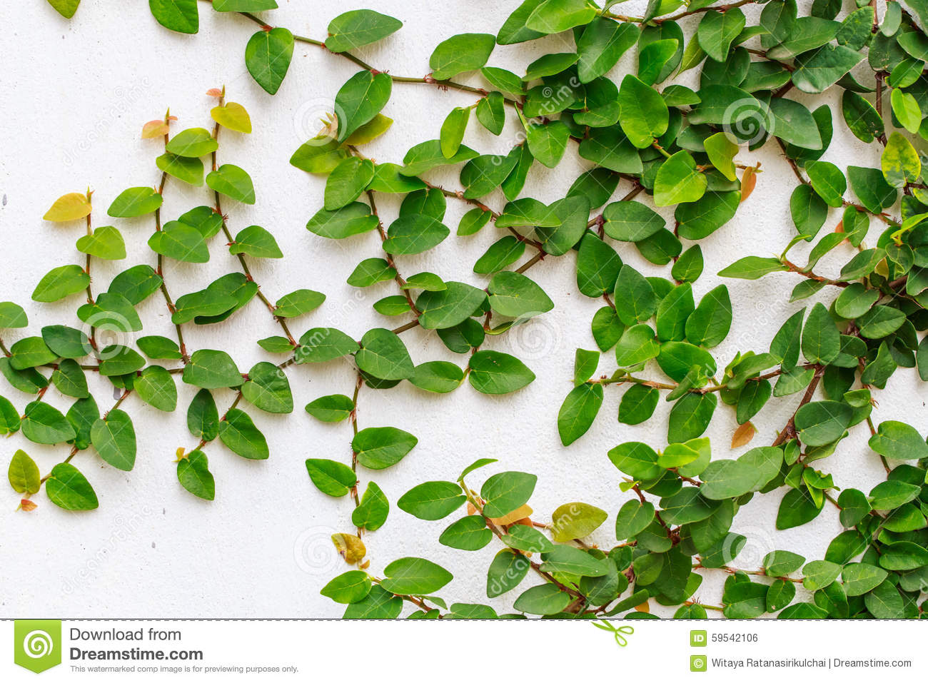 Download Abstract Green Creeper Plant On White Painted Concrete Wall Background Stock Photo - Image of living, attribute: 59542106