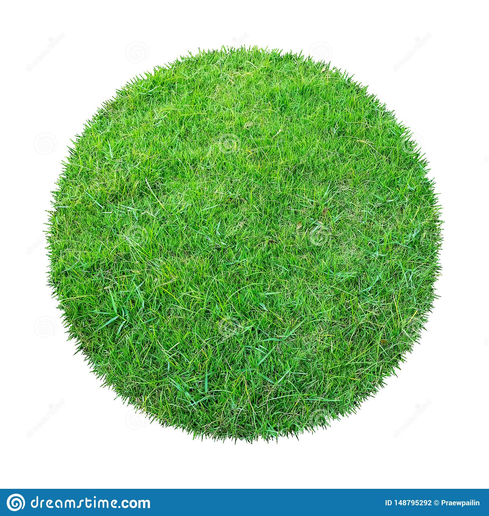 Abstract green grass texture for background. Circle green grass pattern isolated on white background with clipping path