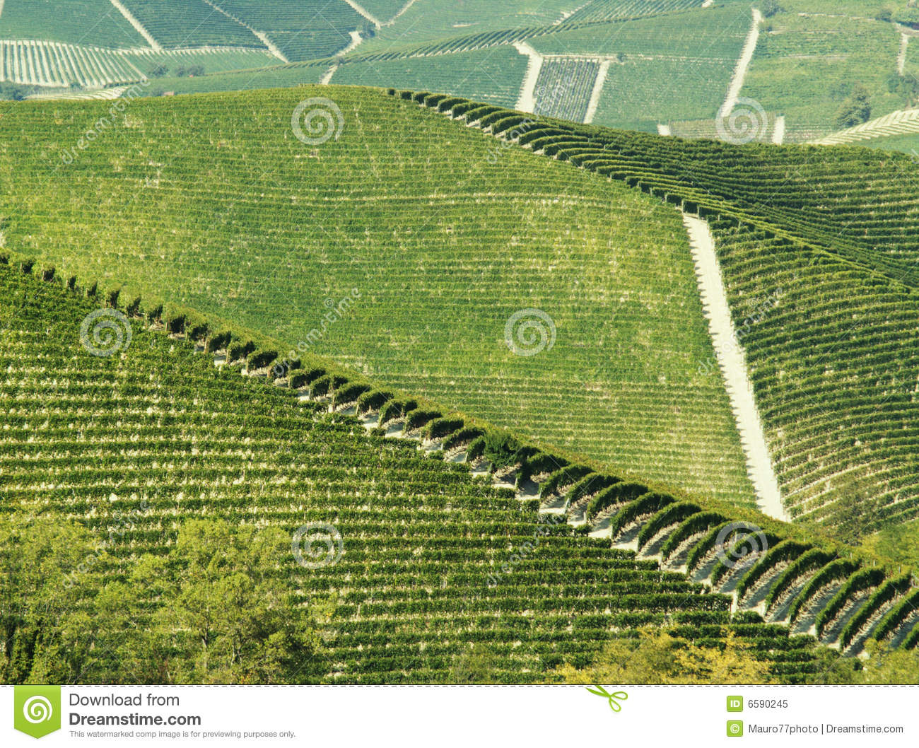 Abstract green vineyards