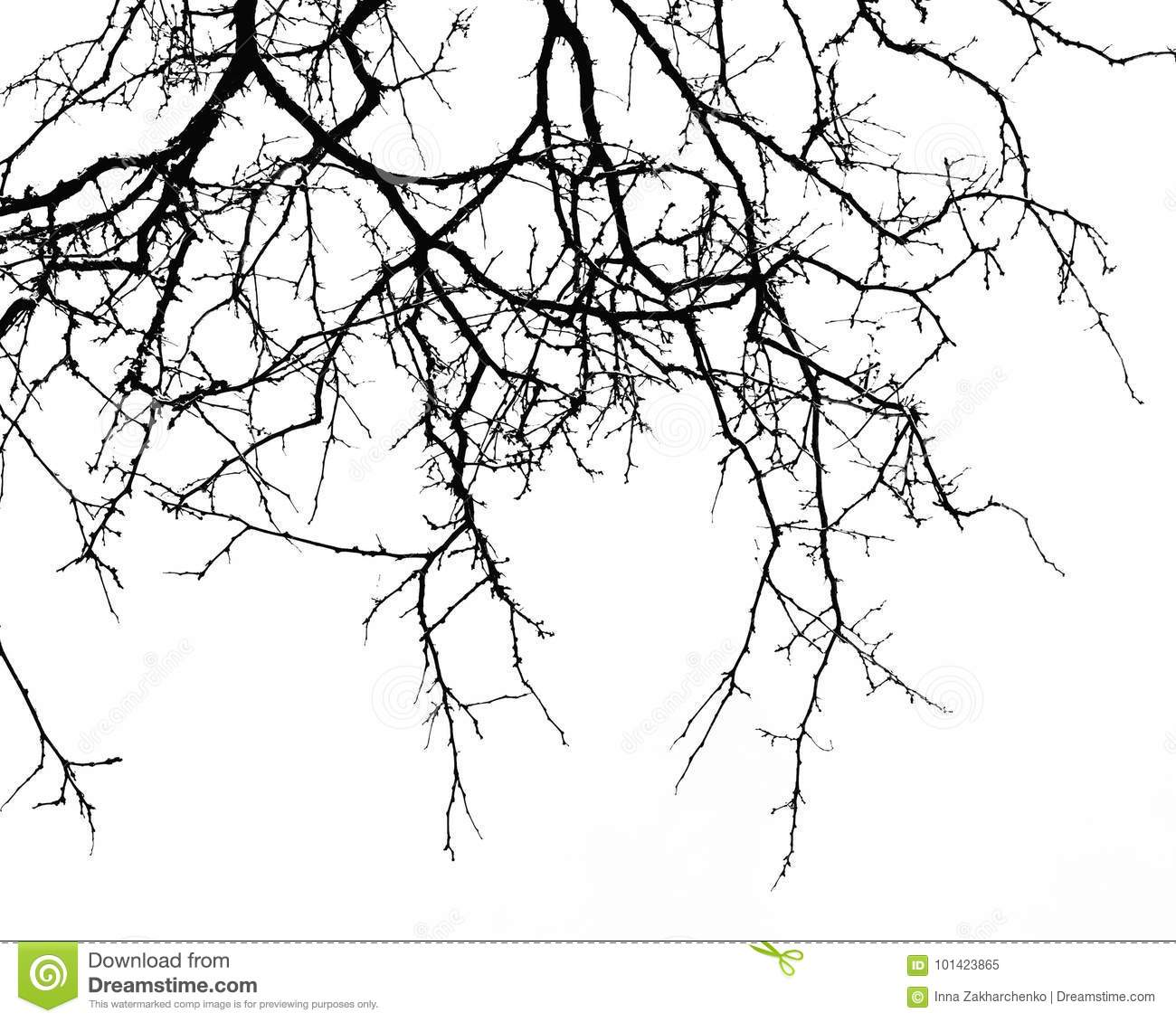 Abstract Halloween Background Black Branch Of Tree On A White B Stock Image Image Of Halloween Horror 101423865