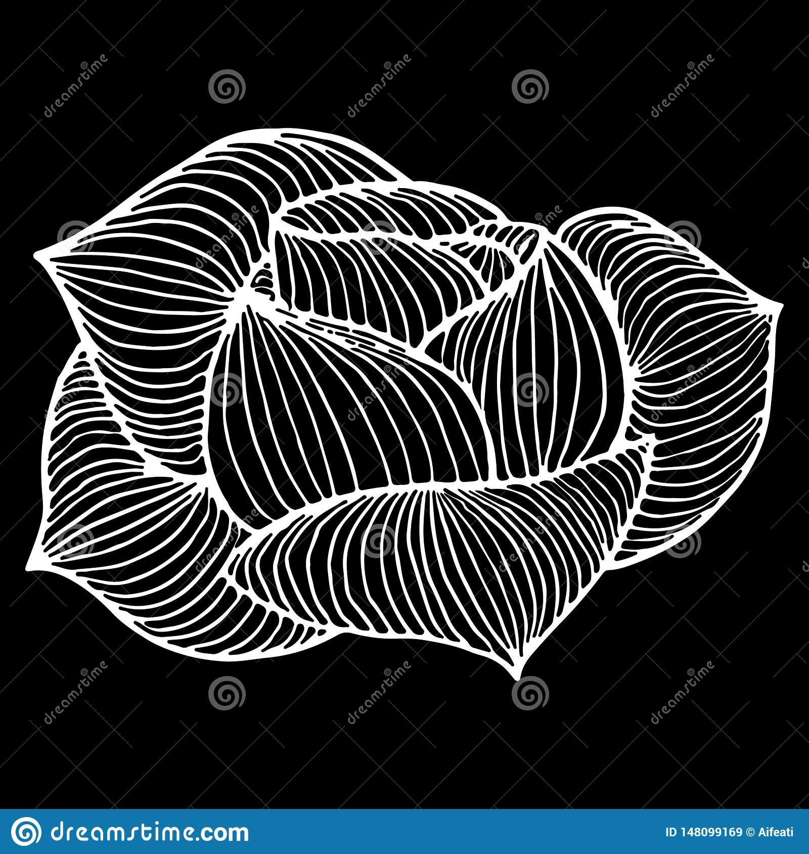 Abstract hand drawn rose or peony flower isolated on black background. Vector illustration. Line art. Sketch