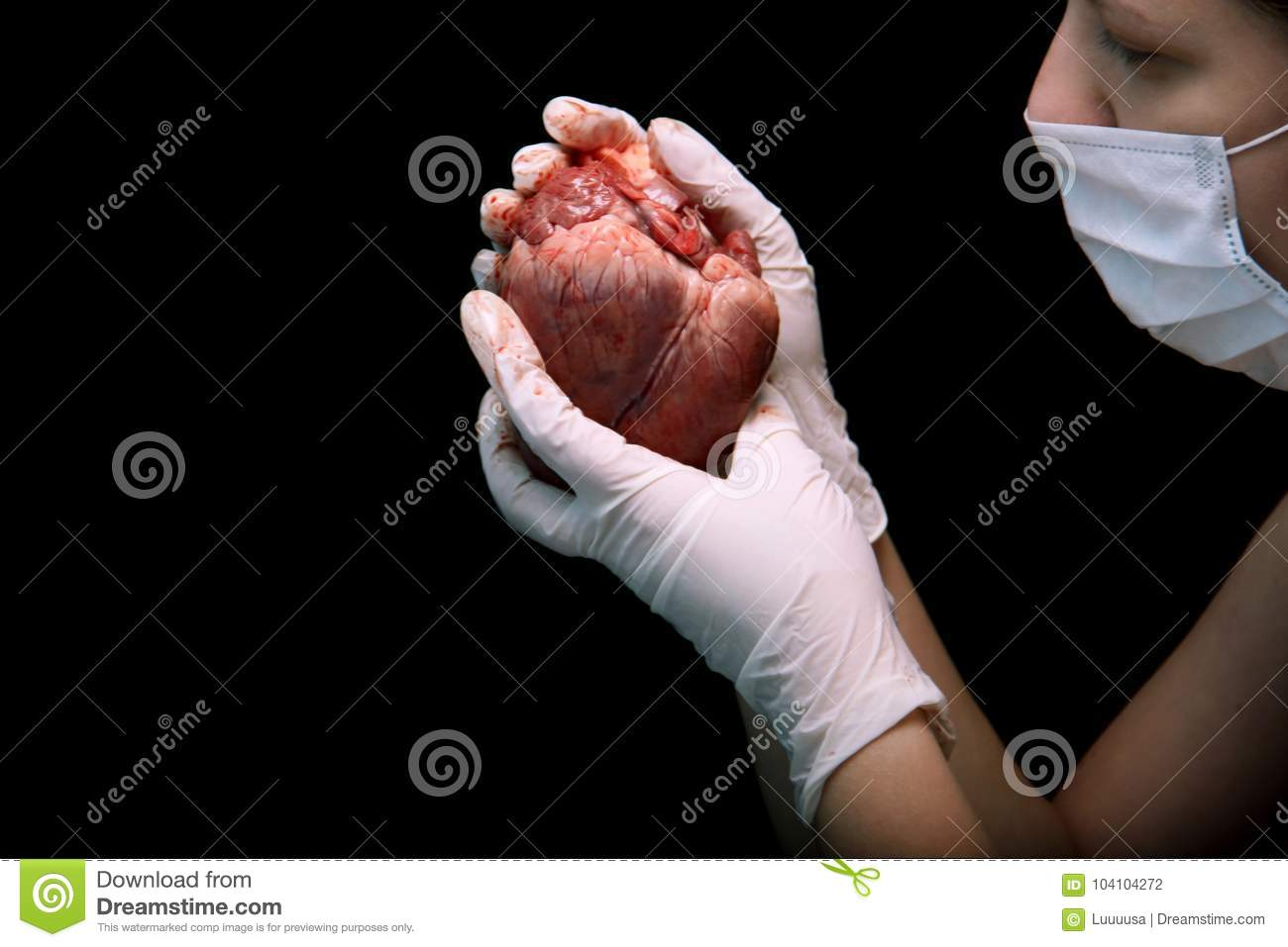 Abstract illegal organ transplantation. A human heart in the hand of a surgeon woman. International crime. Assassins in white coat