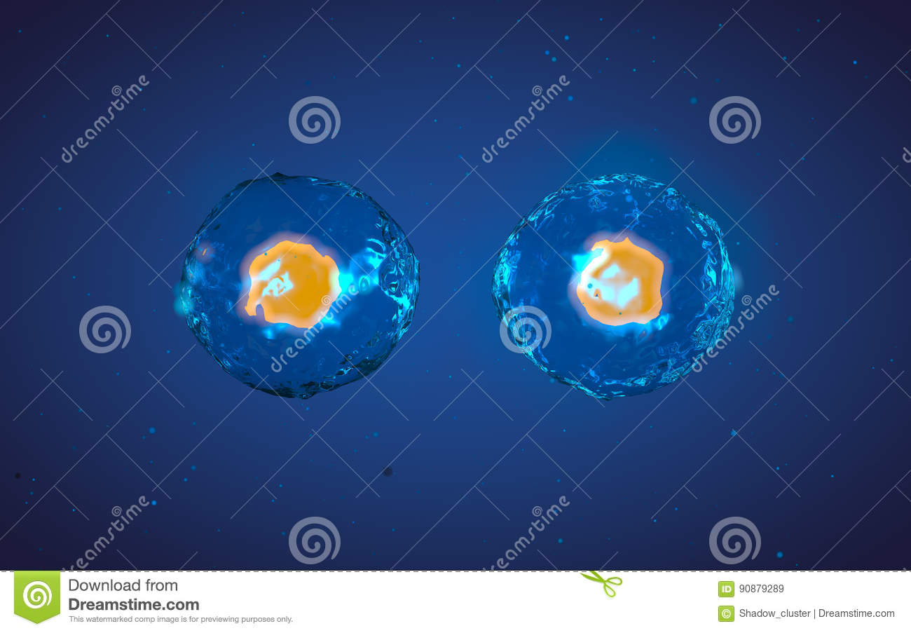 the process of cell multiplication Cell cycle definition- the process of the cell to divide into new cellsinterphase description- the phase that occurs before cell division, the preparation for cell divisions stages: g1- rapid growth of the cell, metabolic activity.