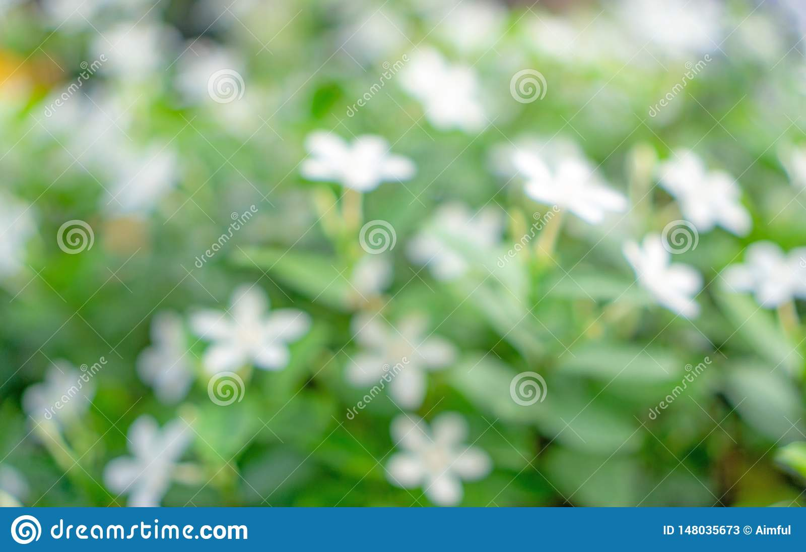 Abstract image from greenery leaf nature, bokeh photo of fresh soft white flower blooming on green leaves blurred background
