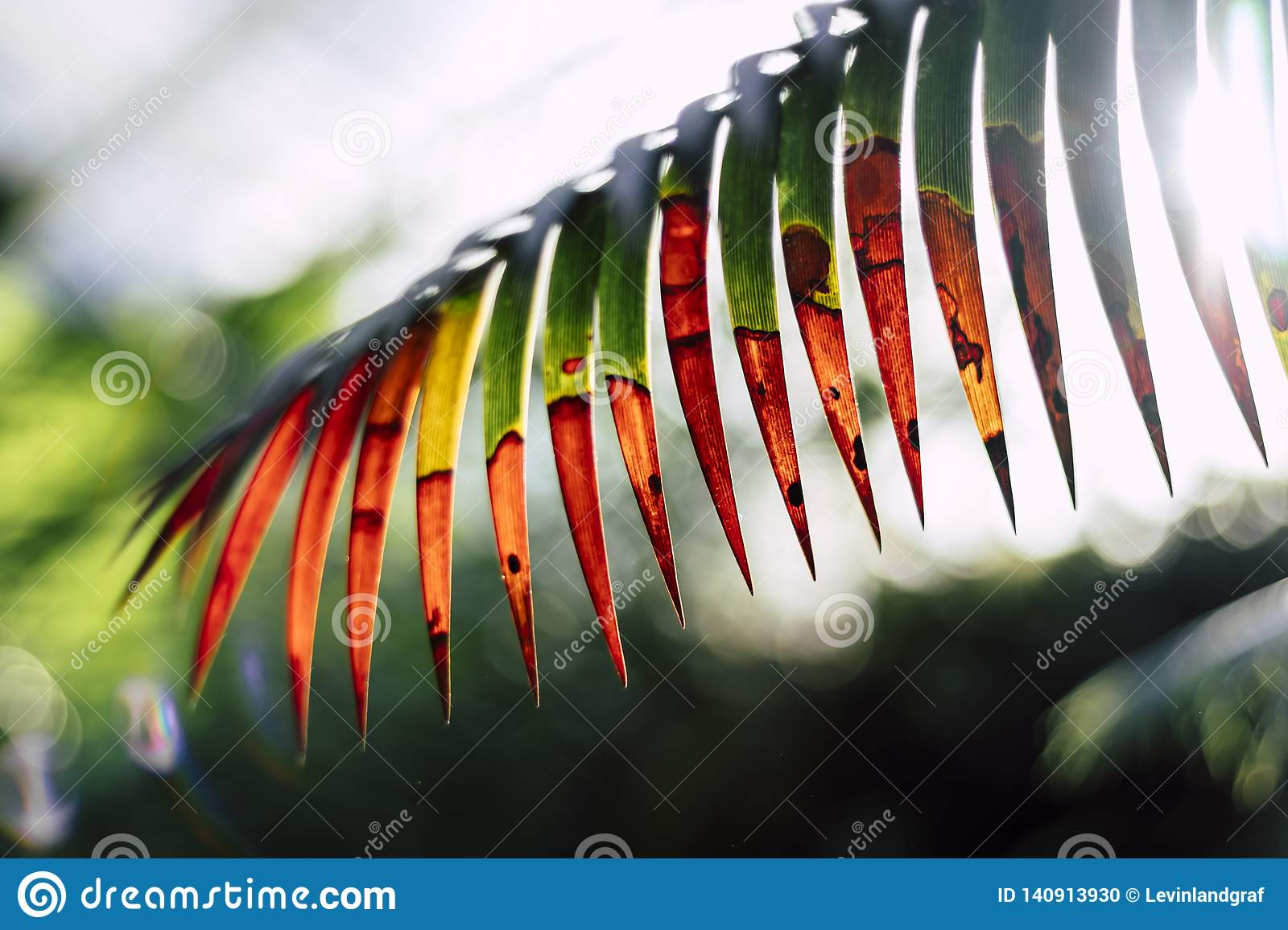 Abstract jurassic looking plant leaf isolated
