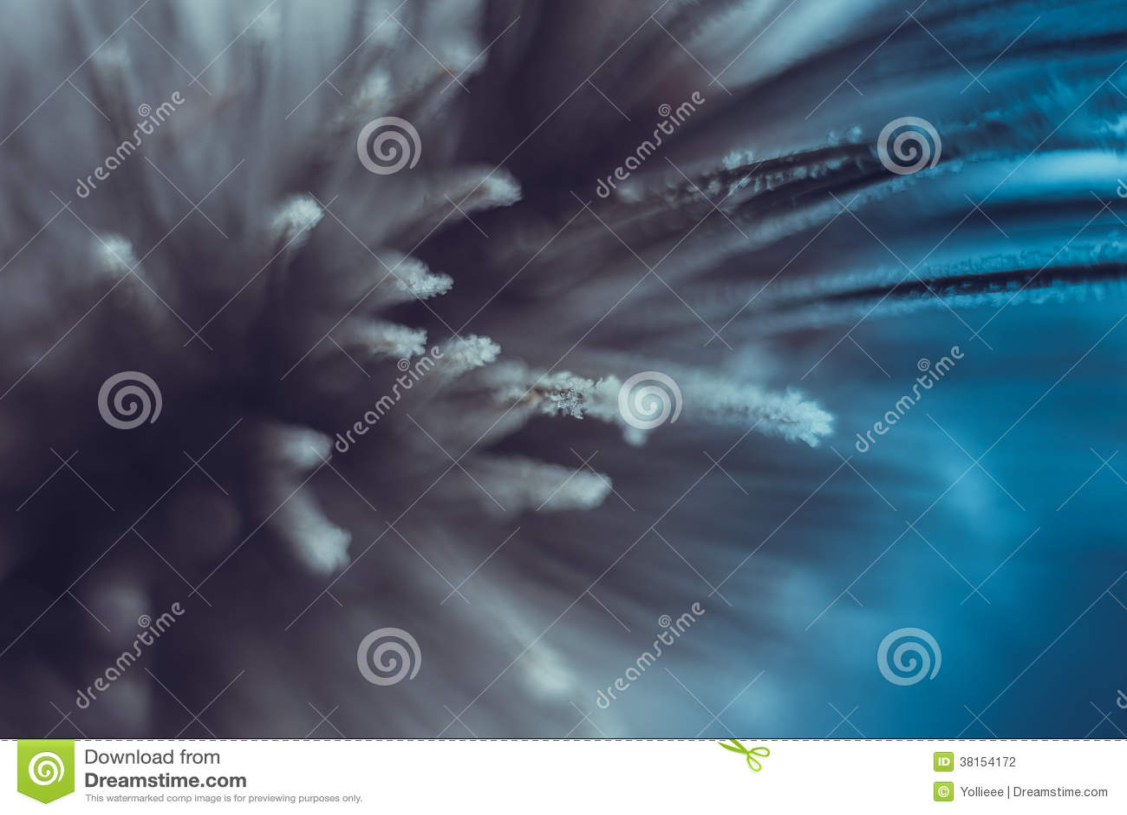 Abstract macro iced pine tree twig