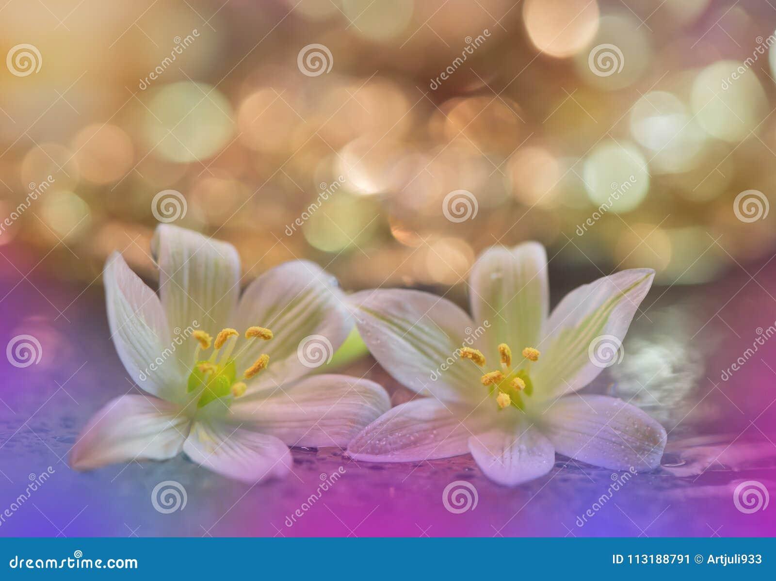 Beautiful macro shot of magic flowers. Border art design. Magic light.Close up macro photography.Conceptual abstract nature.Web.