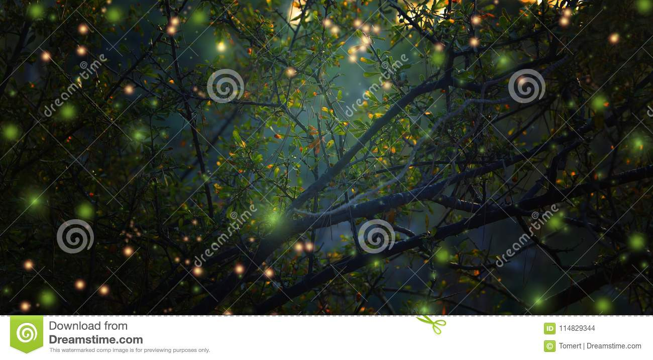 Abstract and magical image of Firefly flying in the night forest