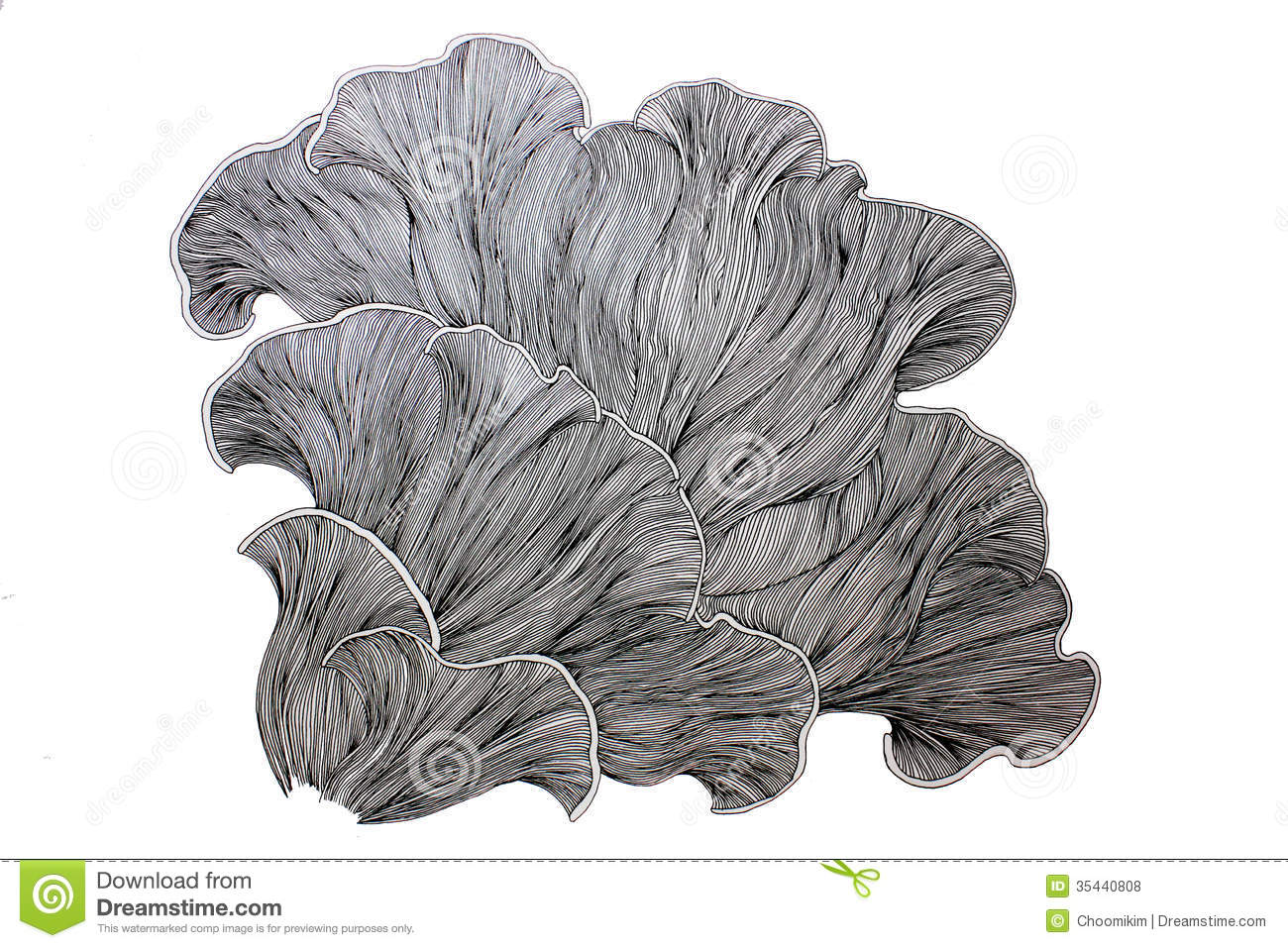 Fine Line Art : Abstract mushroom drawing stock photo. image of lines 35440808