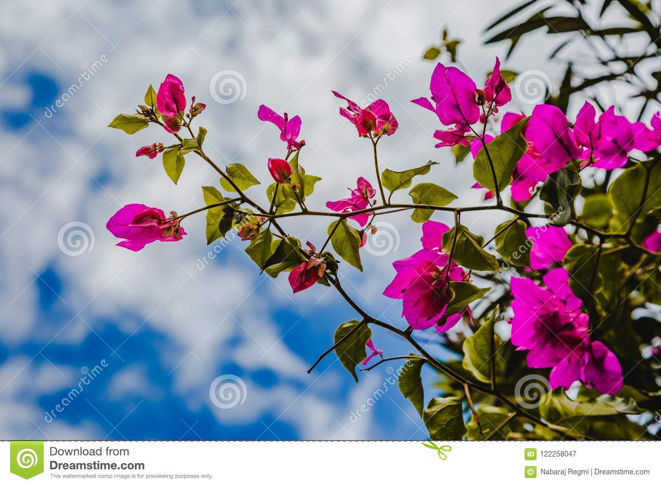 Abstract Natural Nature Pink Flowers Background Spring And Summe