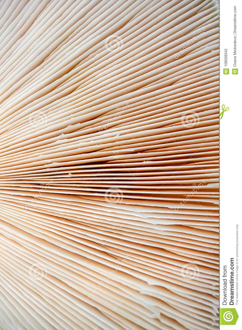 Abstract nature background macro Sajor-caju mushroom plants. The use of design ideas texture pattern or concept natural Wallpaper.
