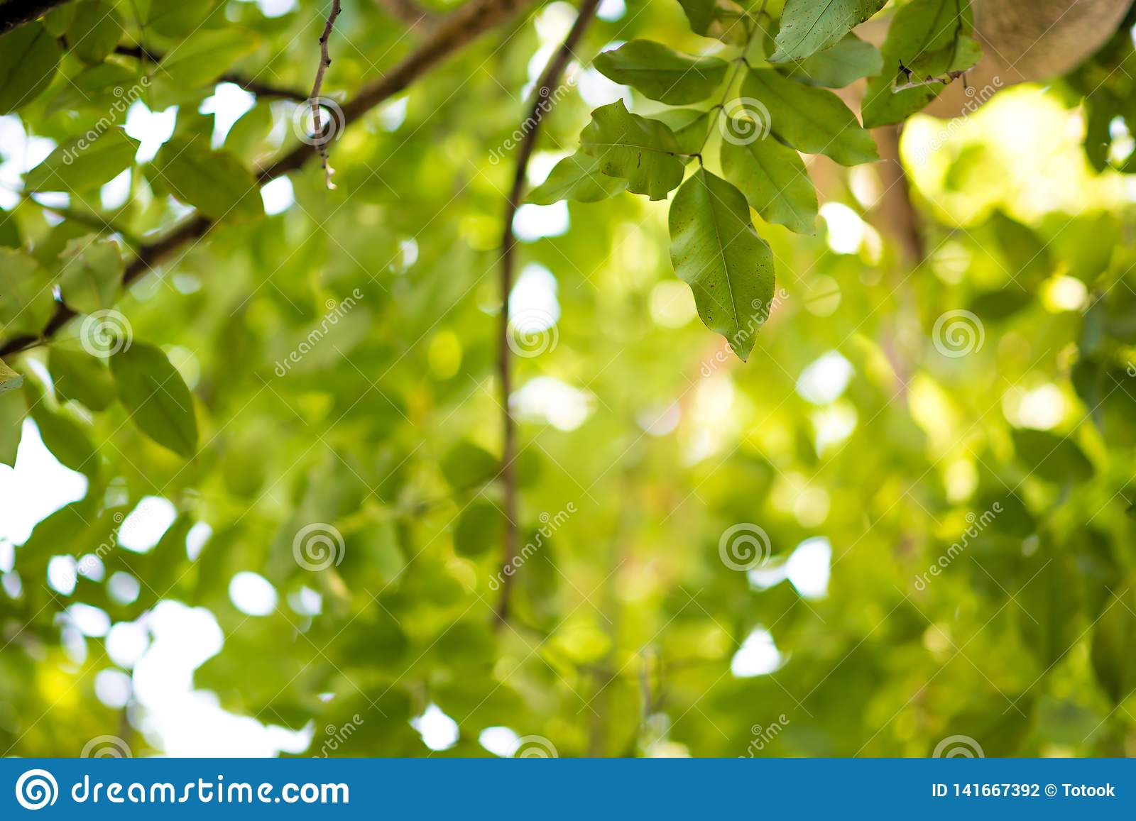 Abstract Nature Green Leaf Background And Beautiful Wallpaper Stock Photo Image Of Floral Forest 141667392 Download premium vector of blank rectangle leafy frame vector by ningzk v. dreamstime com