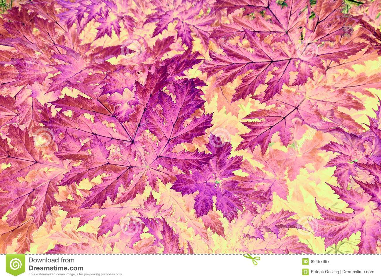 Abstract mauve, pink and purple leaf pattern.