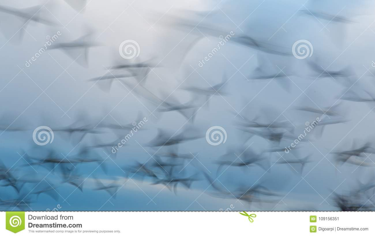 Abstract photo from flying seagulls, long exposure picture