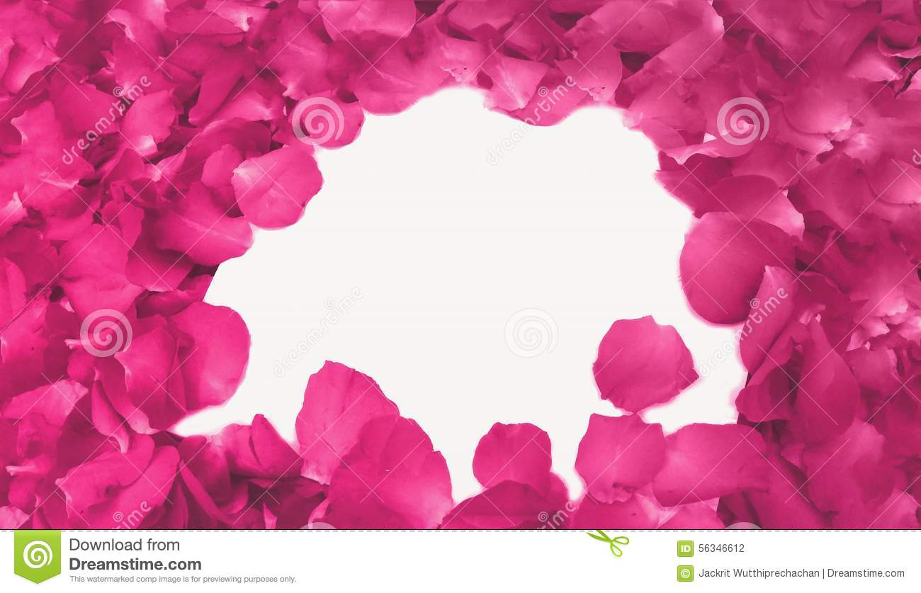 Abstract Pink Rose Petals As Frame Used As Template With Soft Focus
