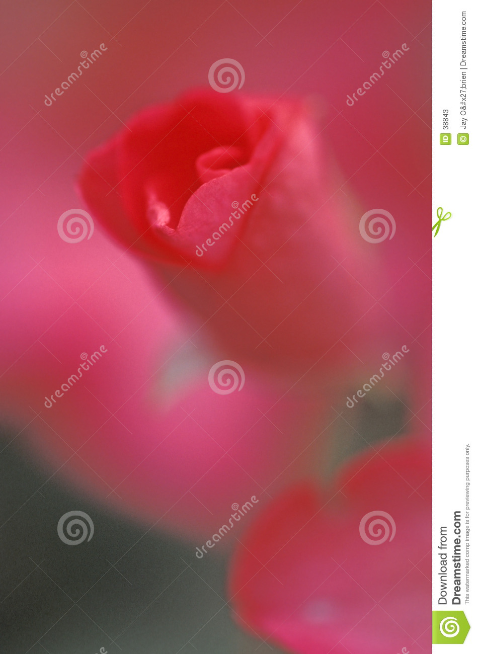 Abstract rose bud