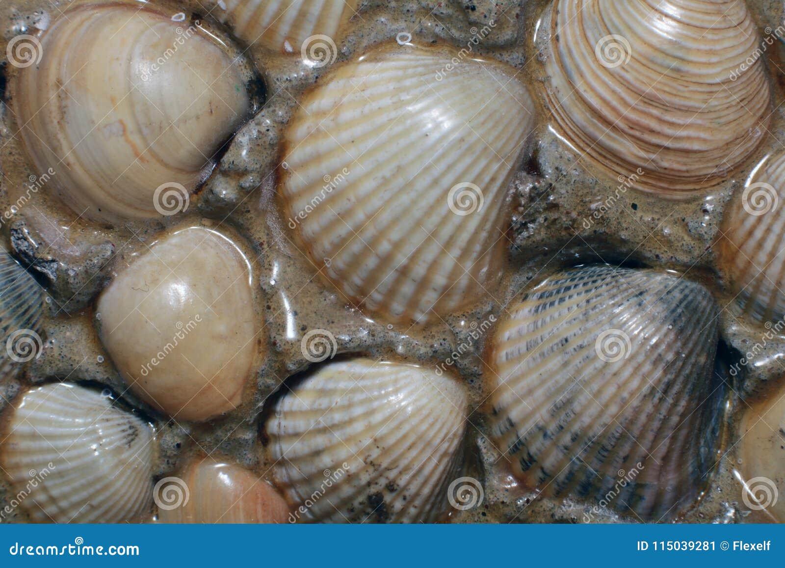Abstract sea floor background.
