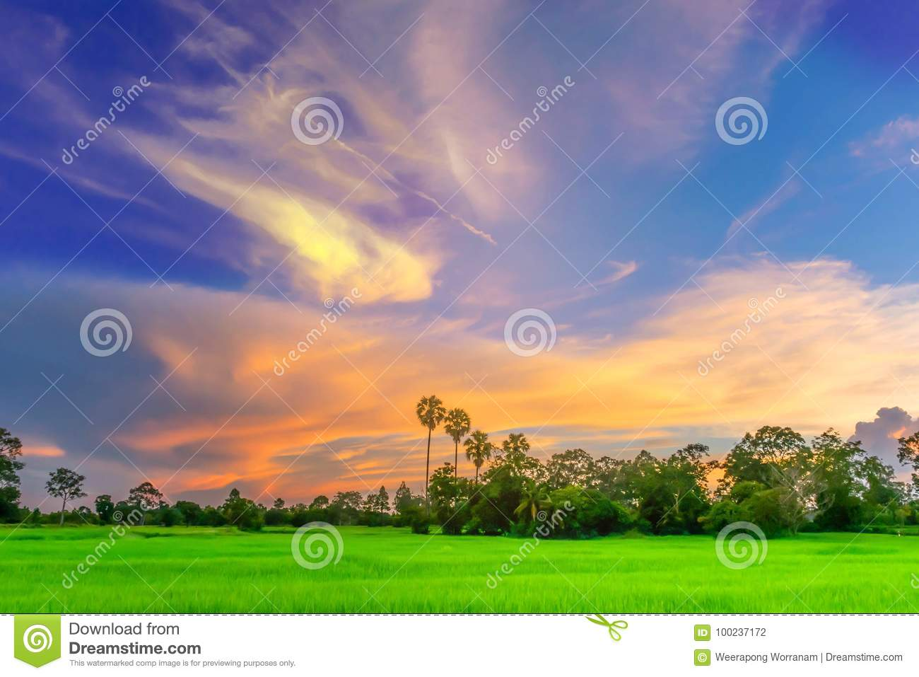 Abstract soft blurred and soft focus silhouette of the sunset with the green paddy rice field, the beautiful sky and cloud in the