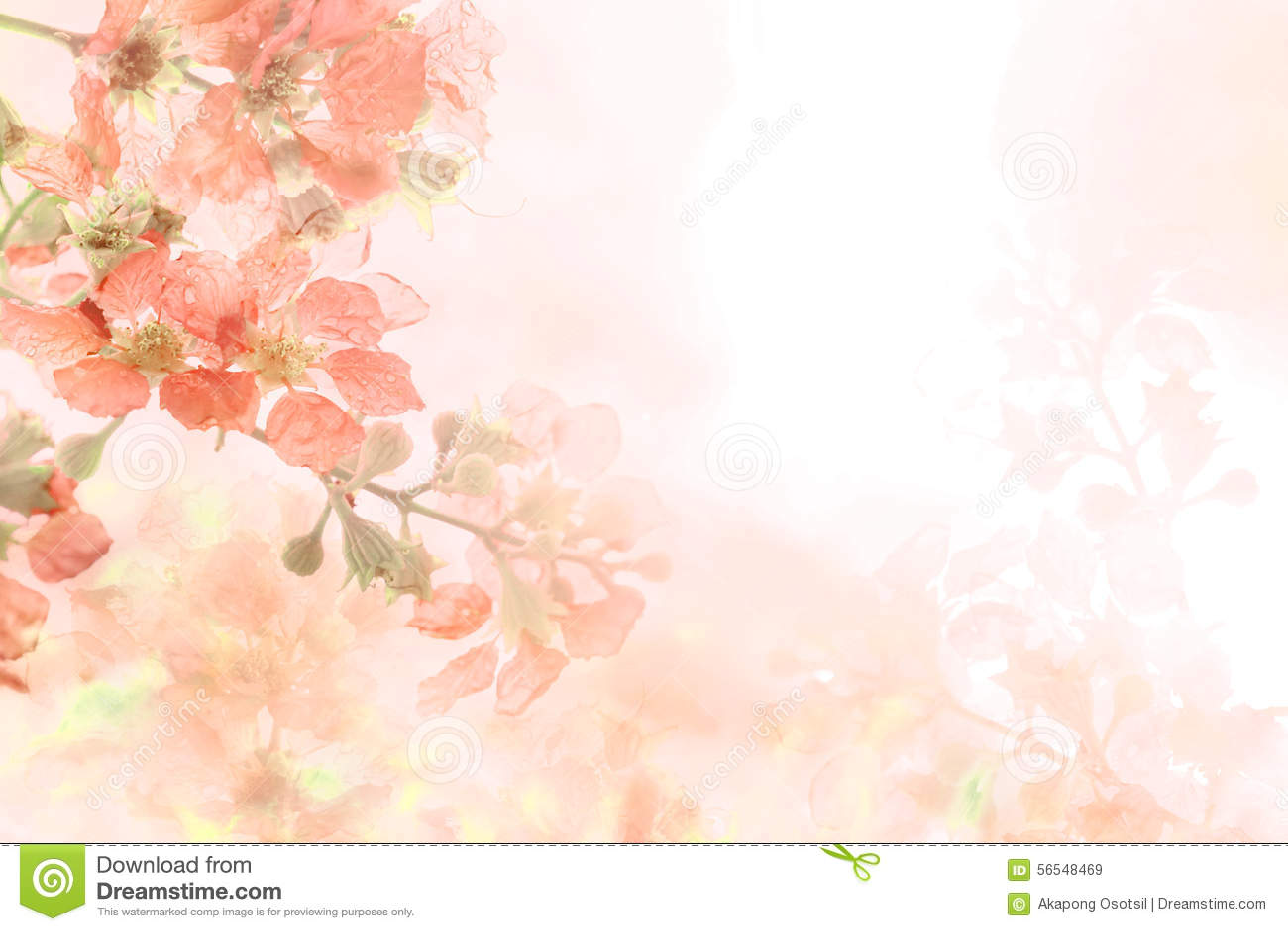 Abstract soft sweet orange flower background from Plumeria frangipani flowers