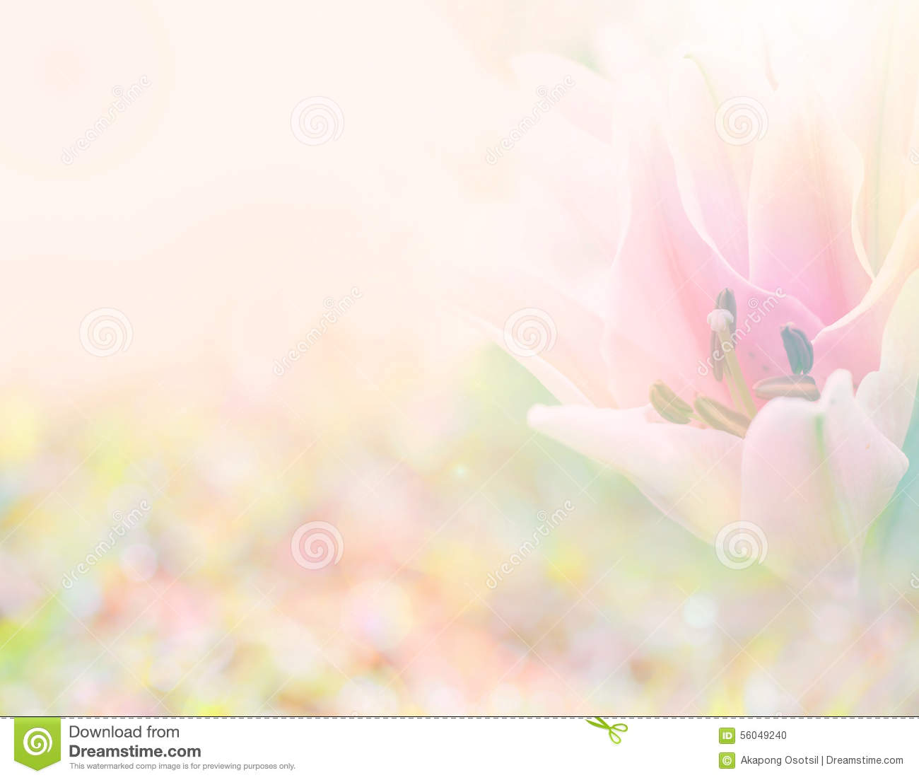Abstract soft sweet pink flower background from lily flowers stock abstract background flower flowers lily pink soft sweet dhlflorist Choice Image