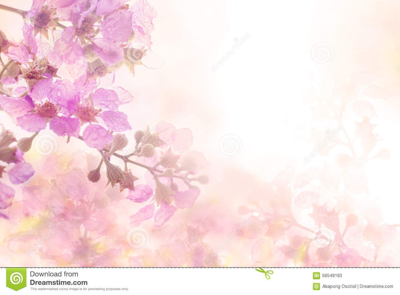 The abstract soft sweet pink flower background from Plumeria frangipani flowers