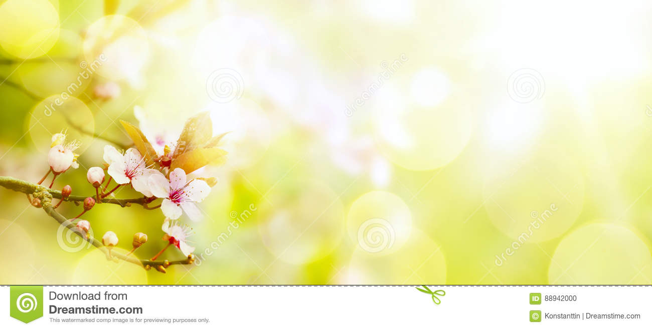 Abstract Spring Flower Background Easter Landscape Stock Photo