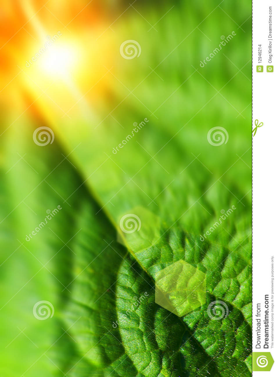 Abstract summer nature theme