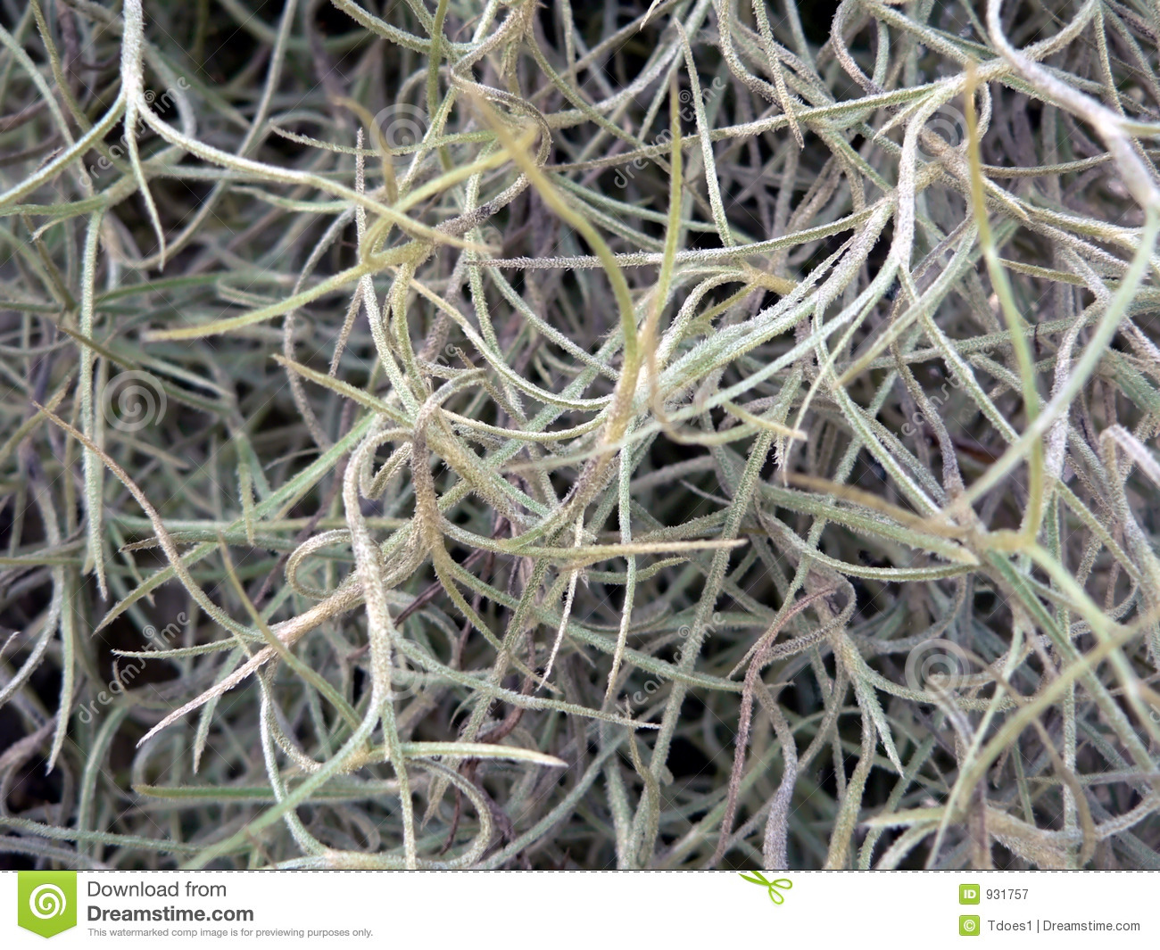 Abstract Texture - Spanish Moss 1 Royalty Free Stock ...