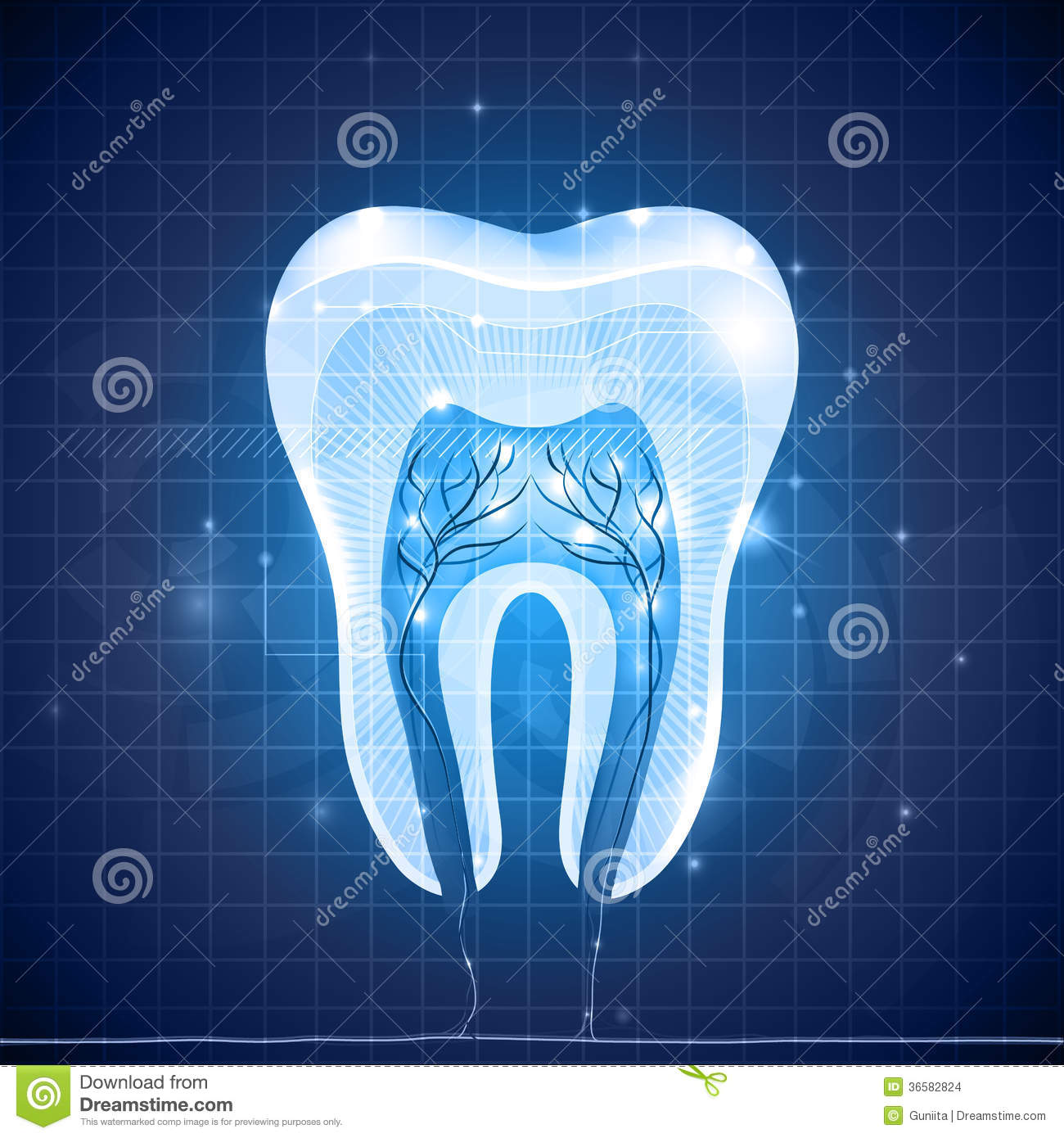 Abstract Tooth Cross Section Stock Illustration Image
