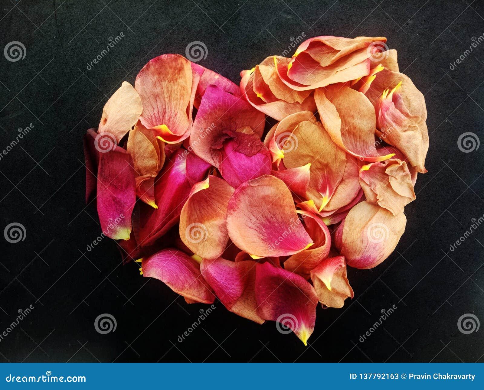 Abstract valentijnskaarthart van Rose Rose-bloemblaadjes met geweven achtergrond