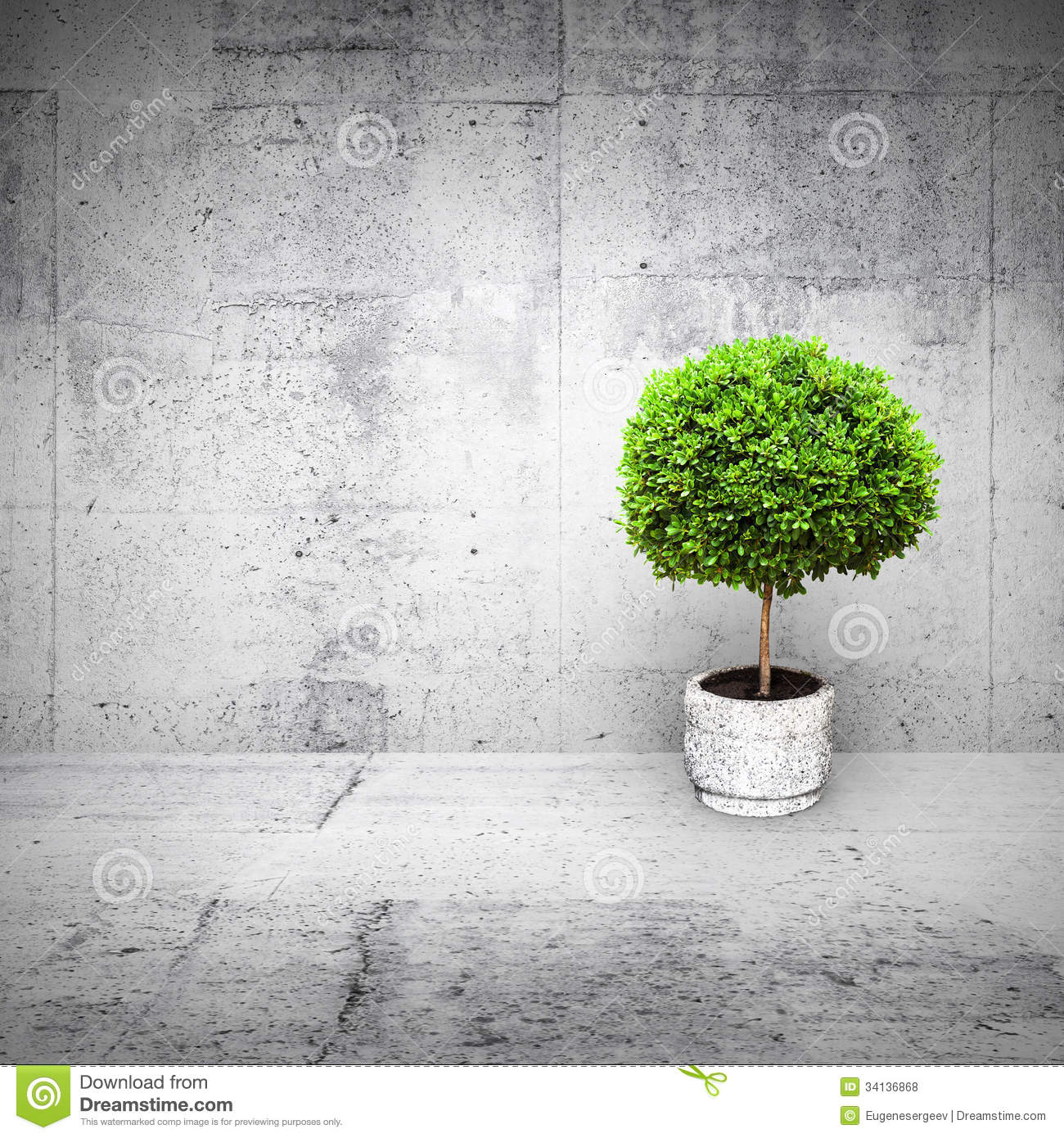 Abstract White Interior With Mall Green Tree Royalty Free Stock Photos Image 34136868