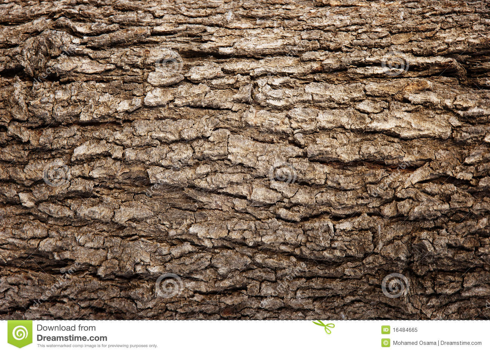 Abstract Wood Texture Bark