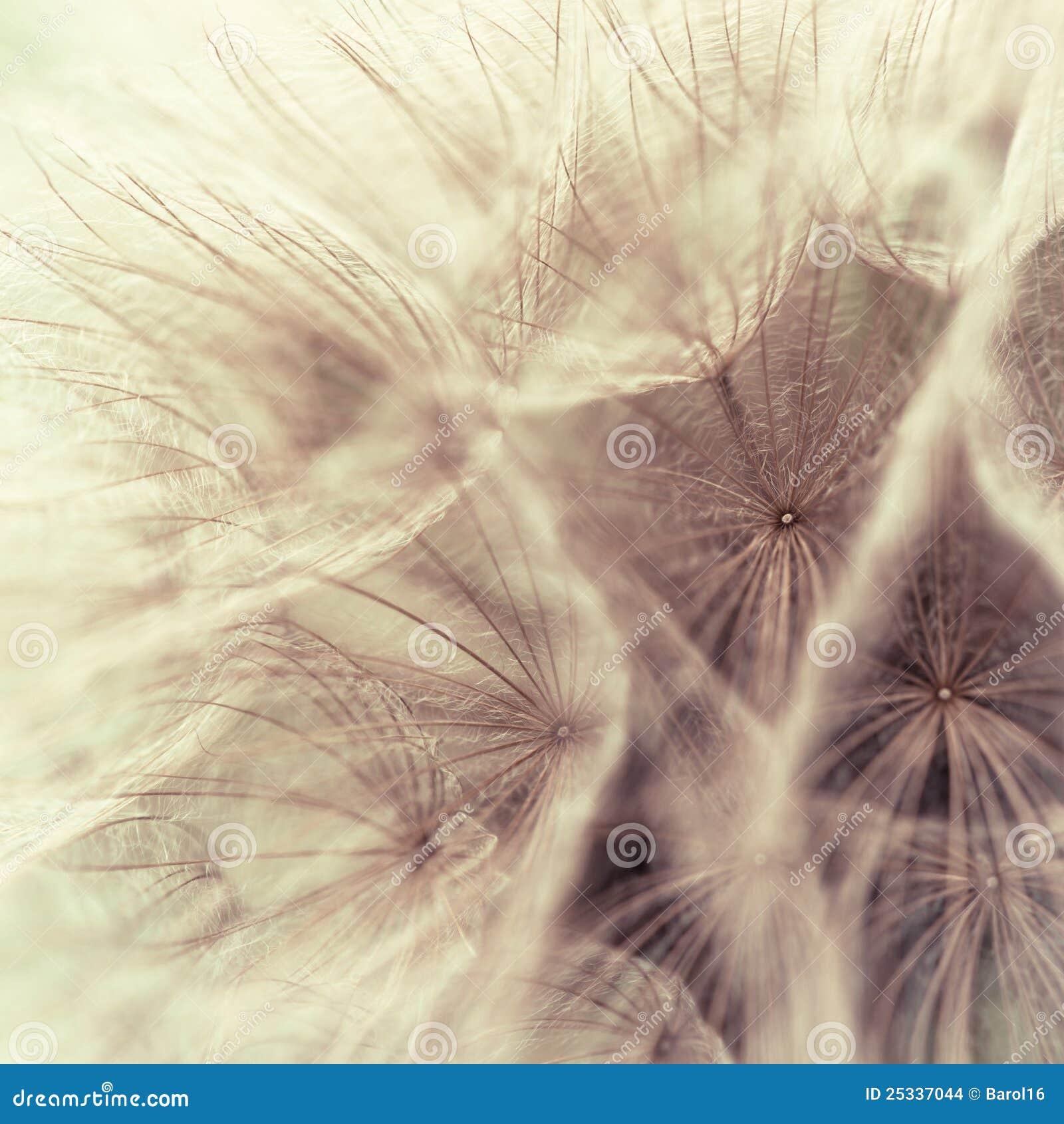 Abstracte close-up van een weideschorseneer