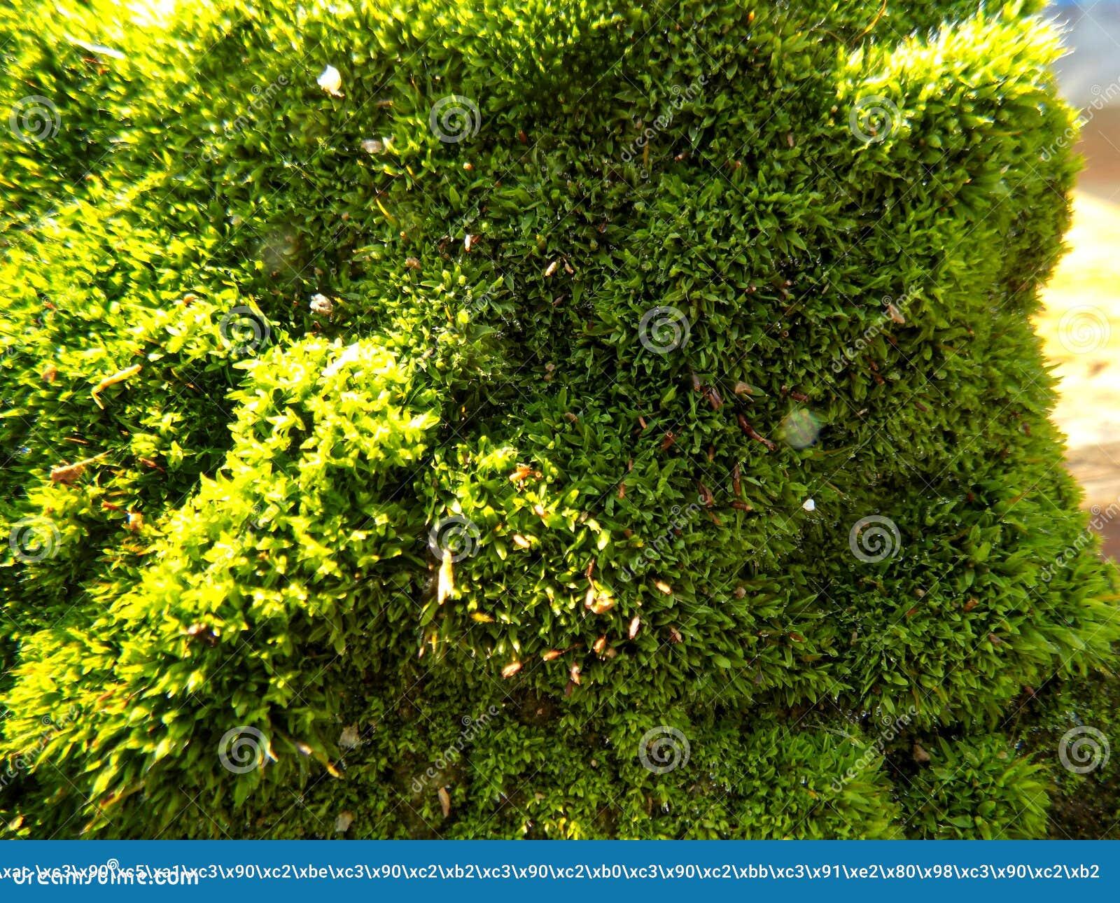 Download Abstracte Mooie Groene Mosachtergrond De Achtergronden Van Het Aardbehang Stock Afbeelding - Afbeelding bestaande uit grijs, groot: 104639967
