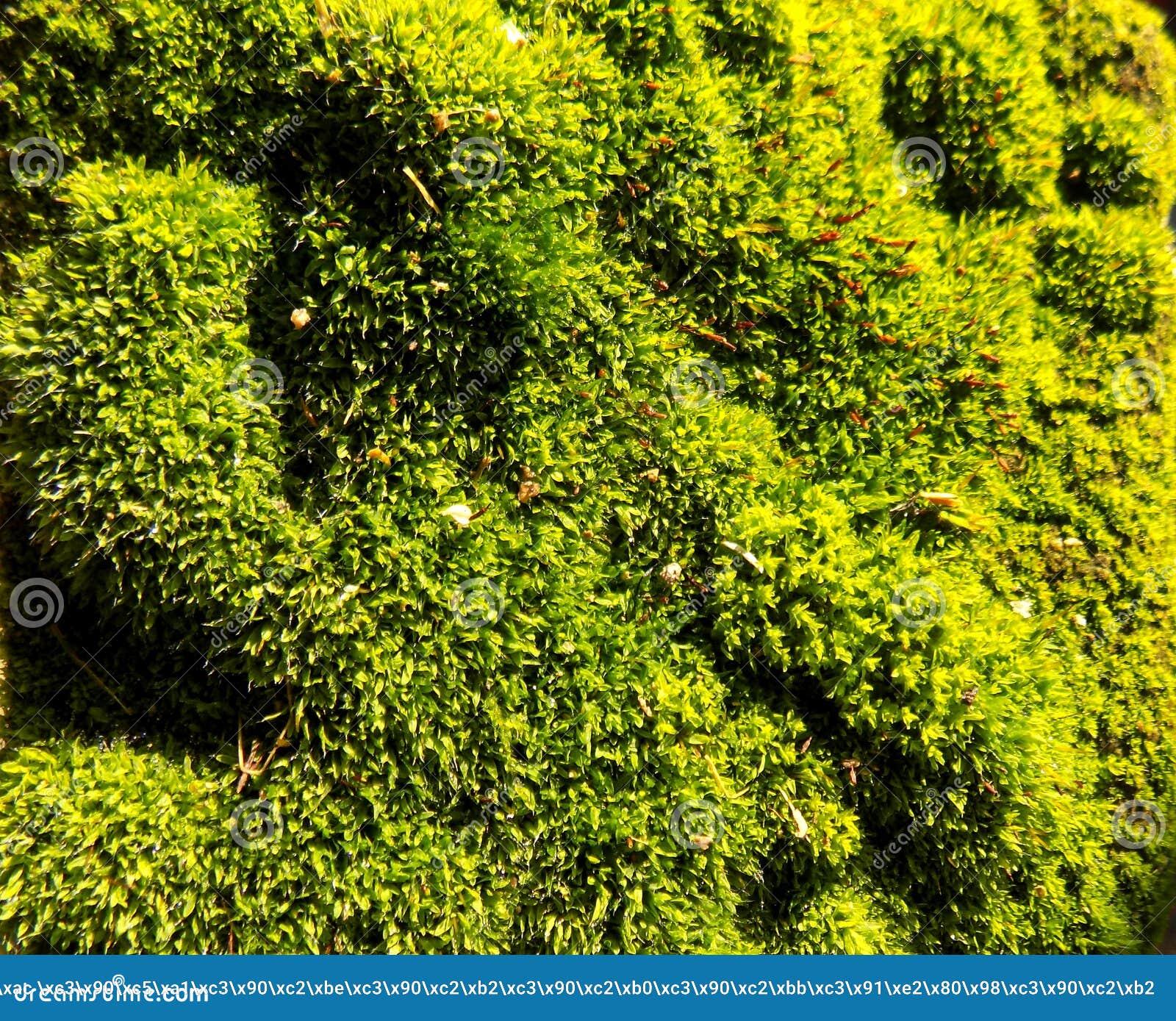 Download Abstracte Mooie Groene Mosachtergrond De Achtergronden Van Het Aardbehang Stock Afbeelding - Afbeelding bestaande uit grijs, nave: 104640019