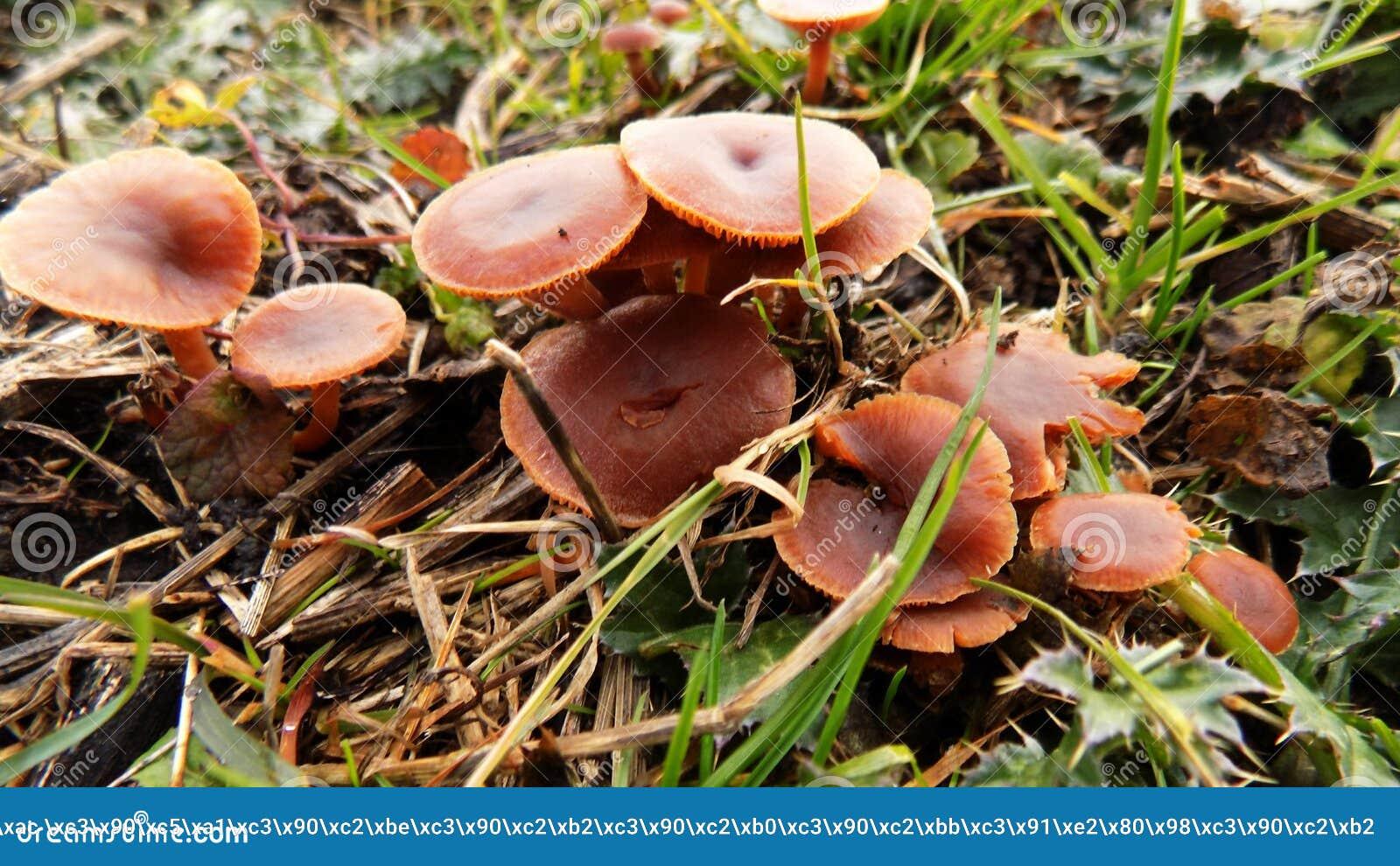 Download Abstracte Mooie Rode Paddestoelachtergrond De Achtergronden Van Het Aardbehang Stock Afbeelding - Afbeelding bestaande uit bloemen, paddestoel: 104640481