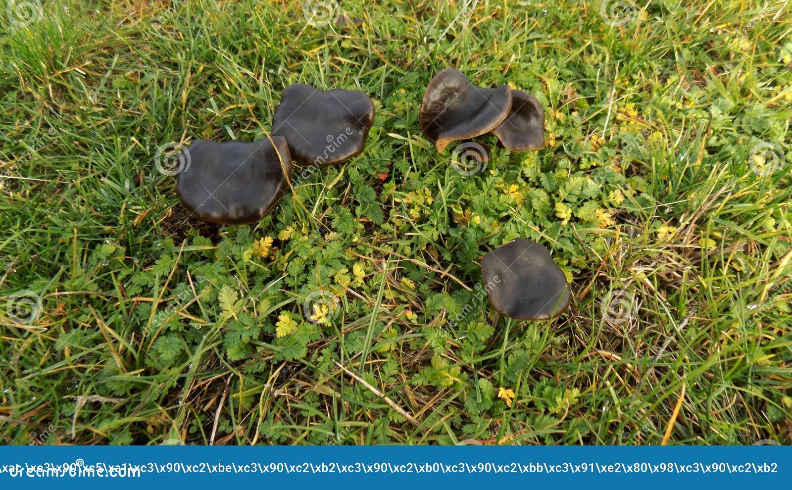 Download Abstracte Mooie Zwarte Paddestoelachtergrond De Achtergronden Van Het Aardbehang Stock Afbeelding - Afbeelding bestaande uit blad, groot: 104640159