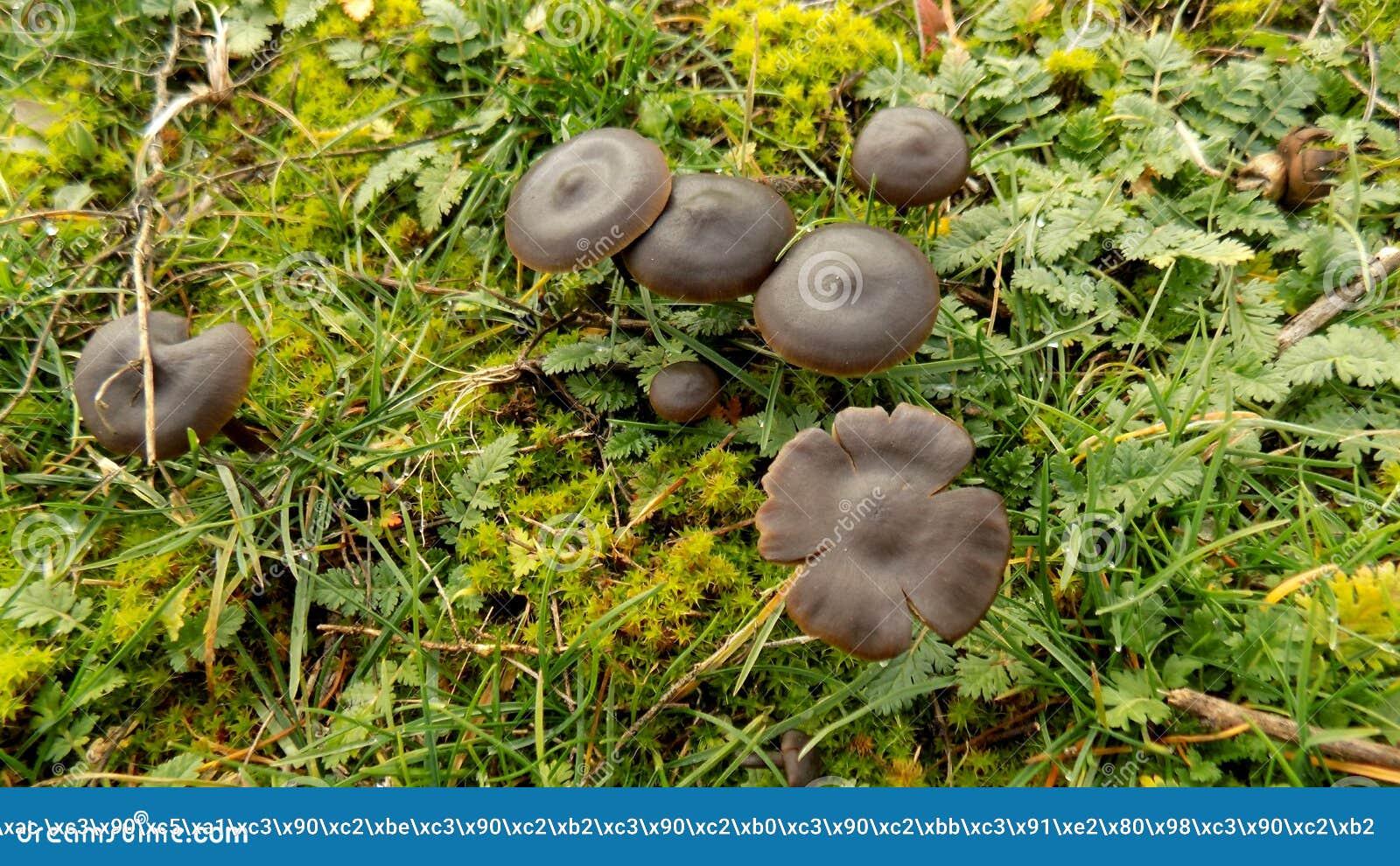 Download Abstracte Mooie Zwarte Paddestoelachtergrond De Achtergronden Van Het Aardbehang Stock Afbeelding - Afbeelding bestaande uit bloemen, autumn: 104640473