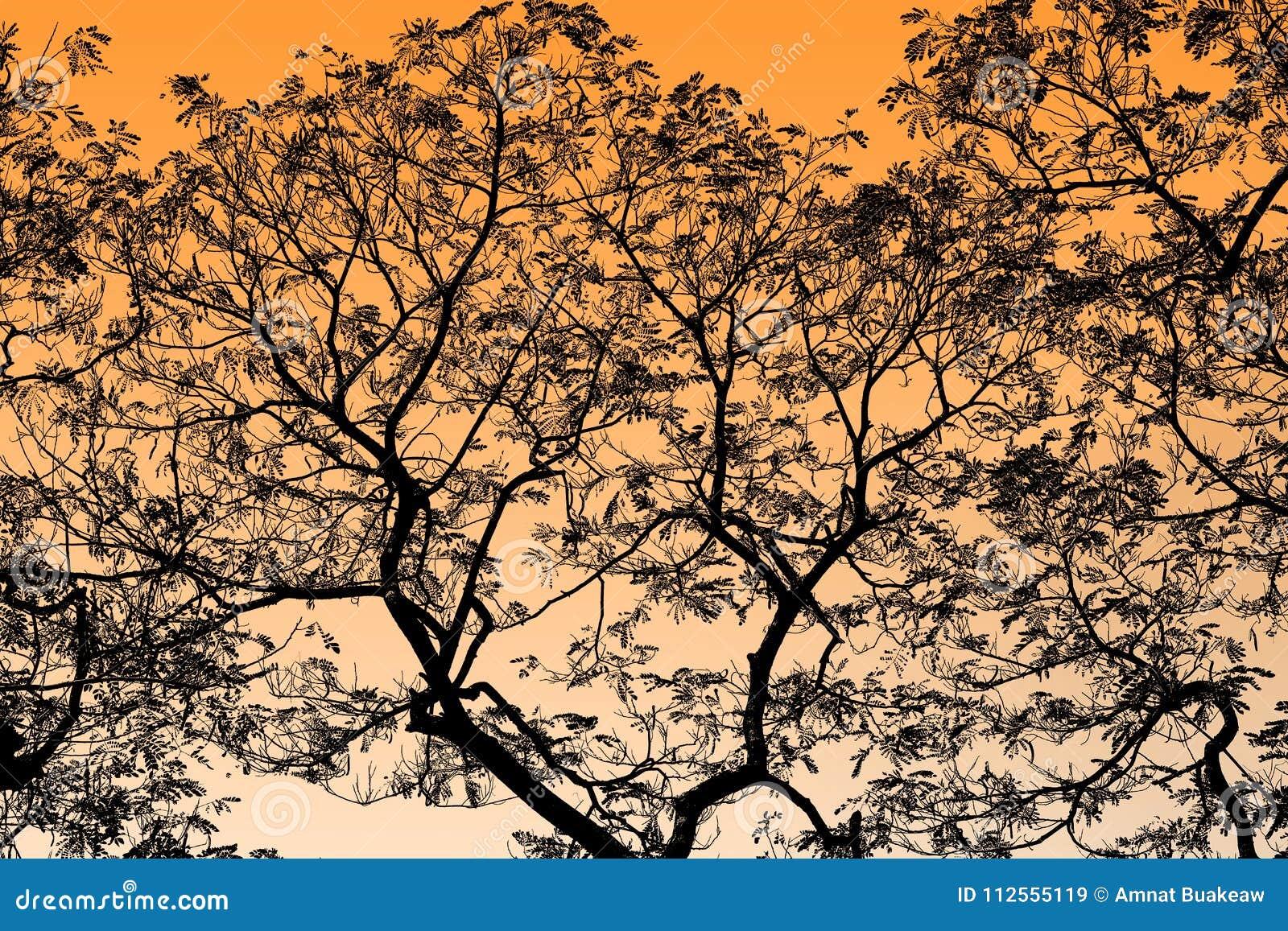 Abstracte Zwarte Boomtakken op Oranje, Geel, gouden hoogtepunt als achtergrond