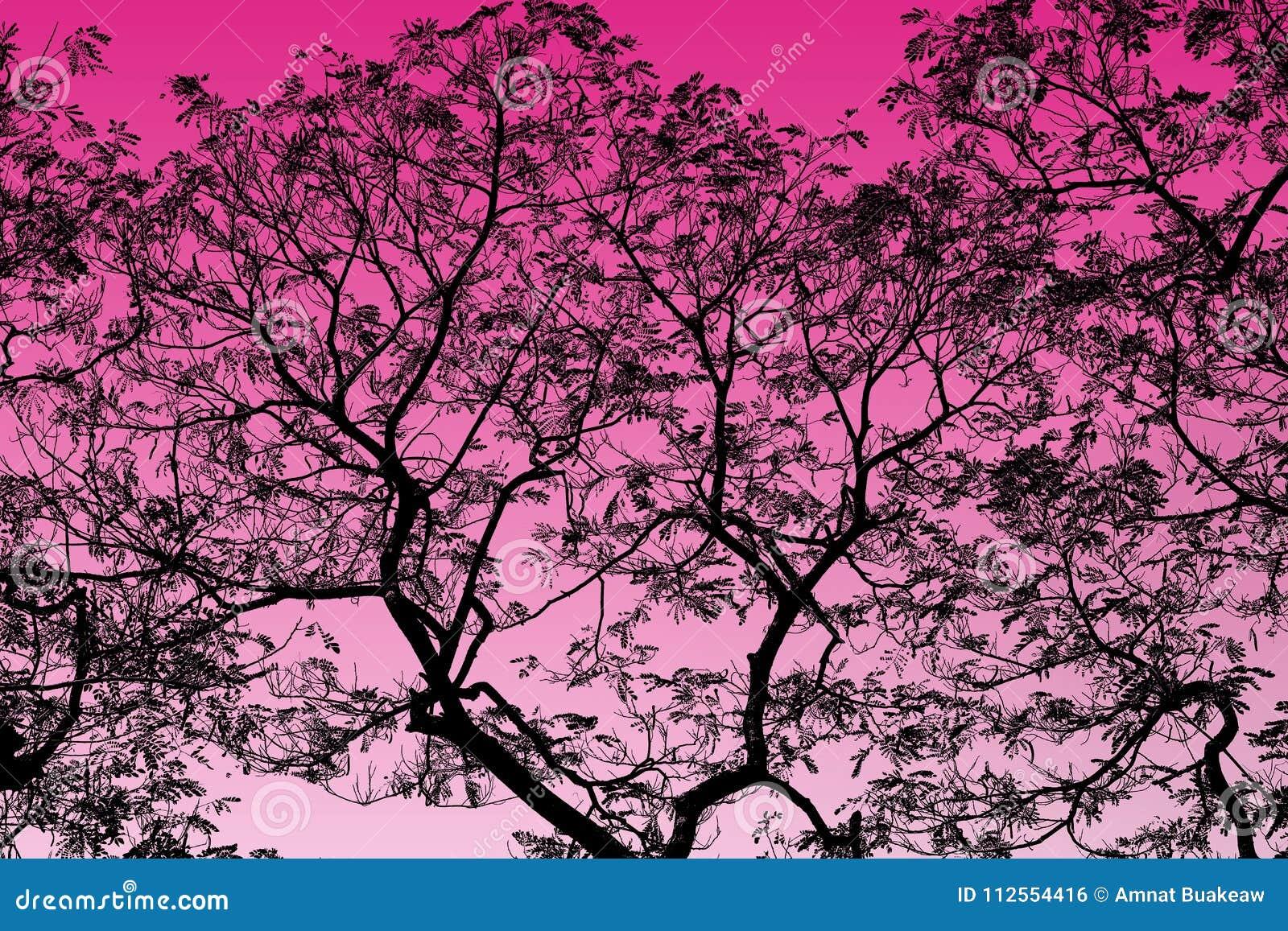 Abstracte Zwarte Boomtakken op Roze hoogtepunt als achtergrond
