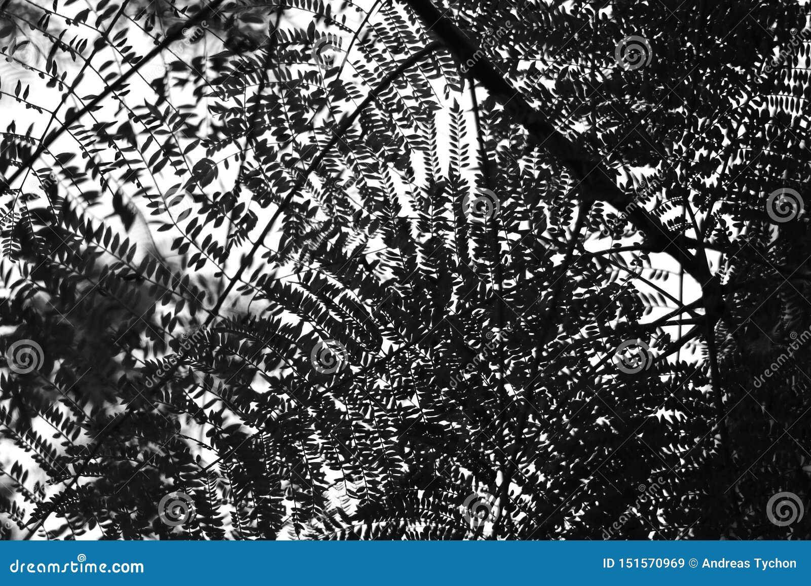 Abstrakcjonistyczna liść tekstura drzewny patrzeć w kierunku nieba